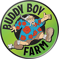 Buddy Boy Farms- Clean Green Marijuana