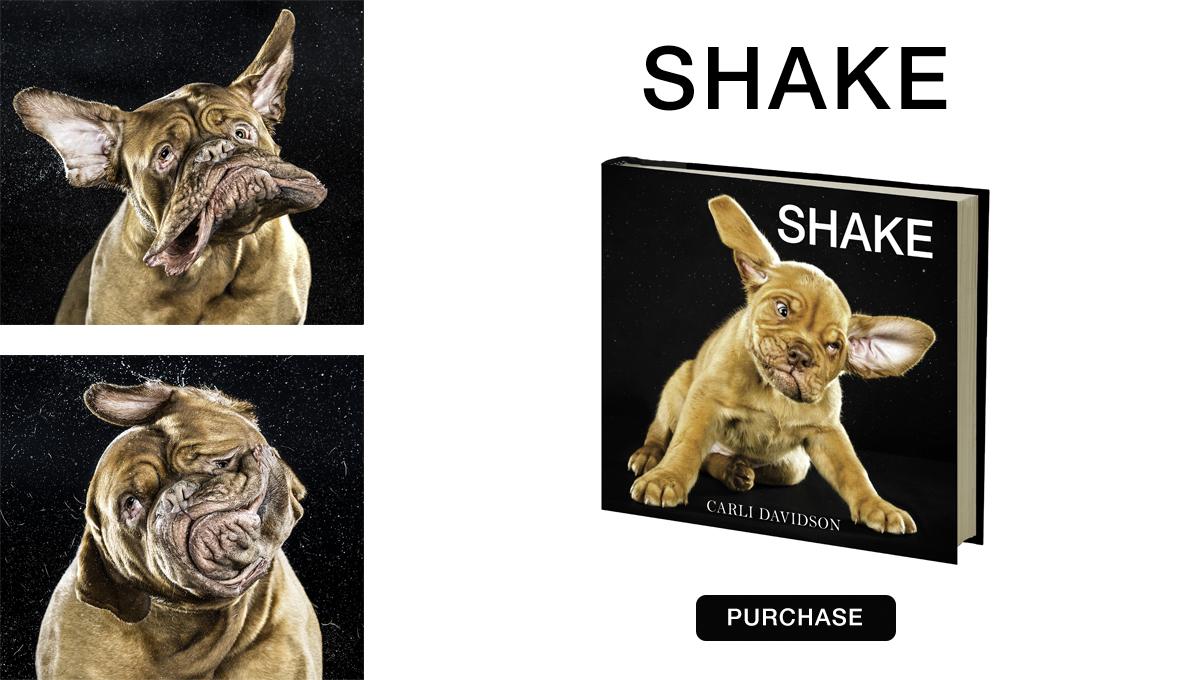 shake slide.jpg