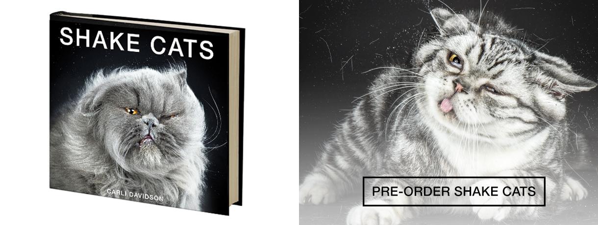 cats slide18.jpg