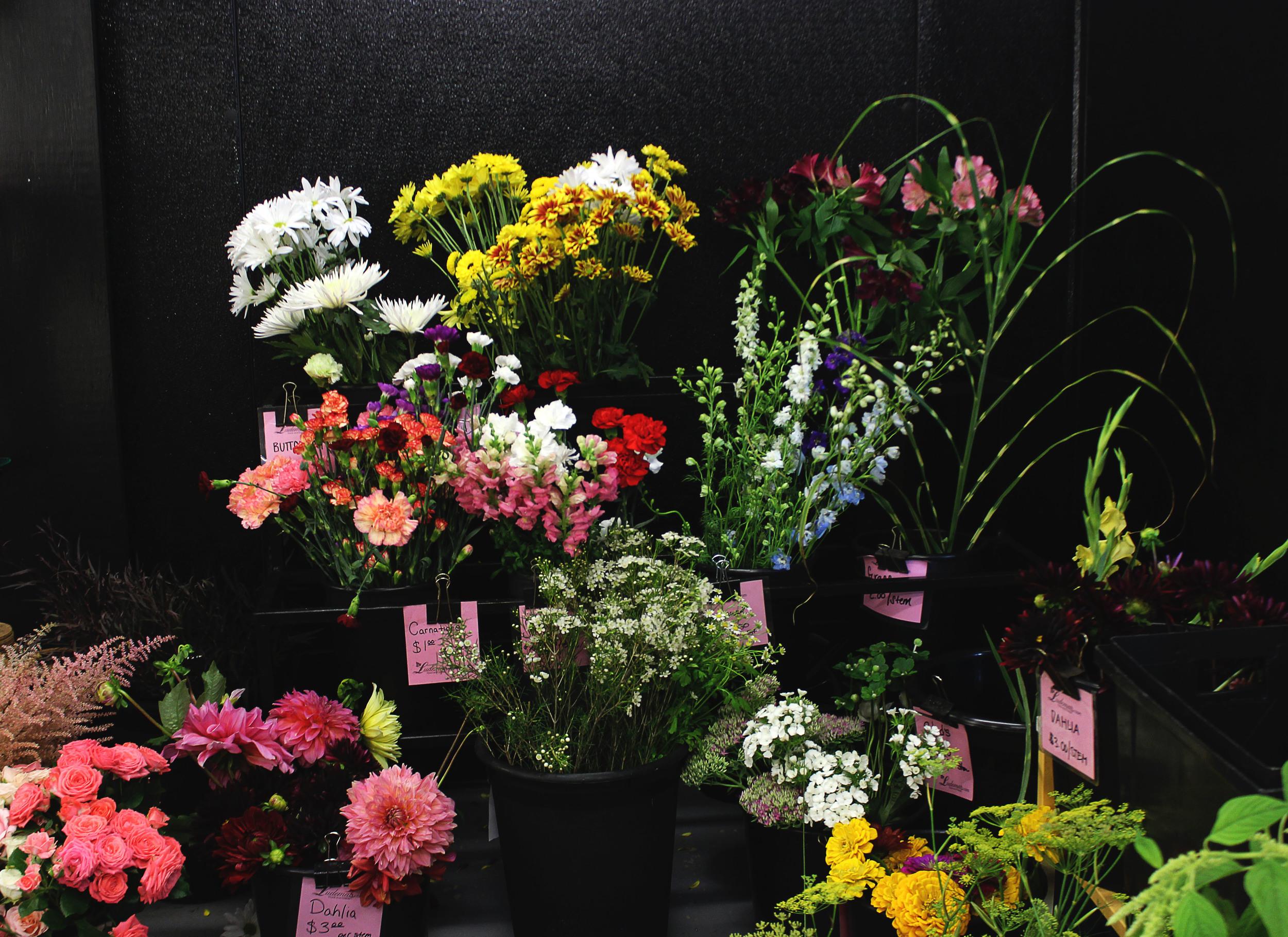 flora9 2.jpg