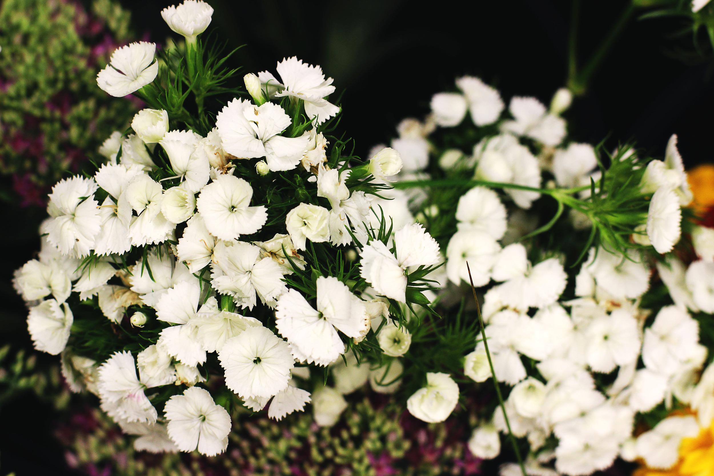 flora11.jpg