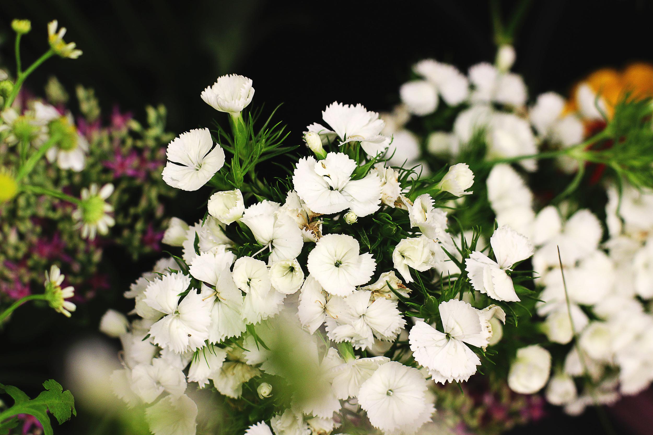 flora9.jpg