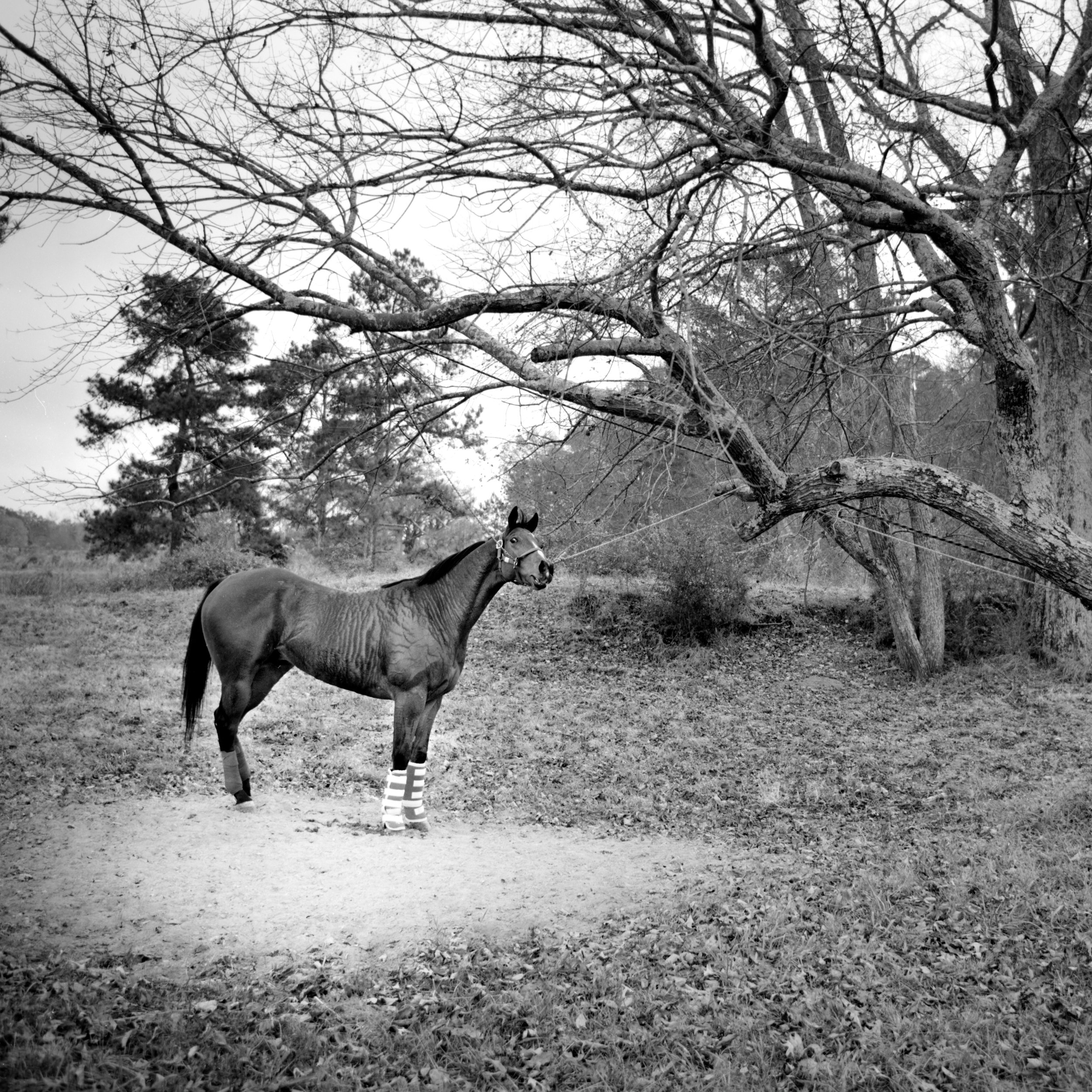 BT Horse under tree wp.jpg