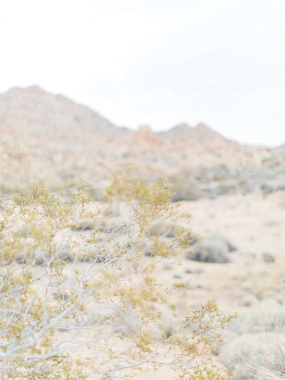 Joshua Tree Engagement Session | What to Wear for Pictures | Southern California Wedding Photographer | Mastin Labs Fuji Film | Fine Art Photographer | Desert Shoot | Desert Details.jpg