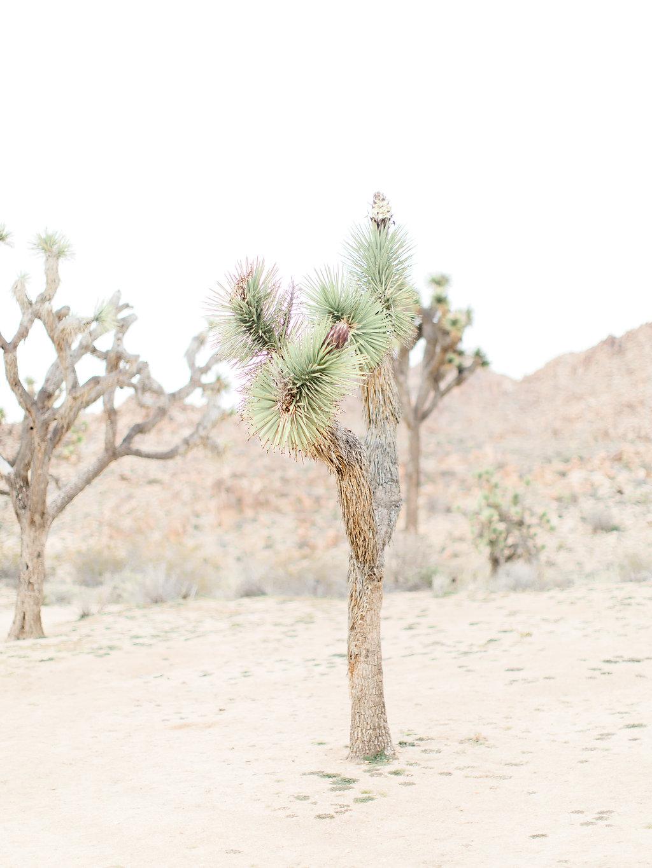 Joshua Tree Engagement Session | What to Wear for Pictures | Southern California Wedding Photographer | Mastin Labs Fuji Film | Fine Art Photographer | Desert Shoot | Joshua Tree.jpg