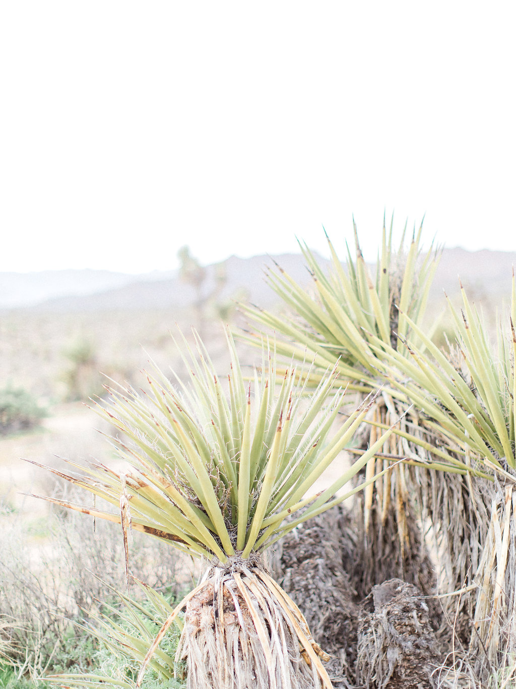 Joshua Tree Engagement Session | What to Wear for Pictures | Southern California Wedding Photographer | Mastin Labs Fuji Film | Fine Art Photographer | Desert Shoot.jpg
