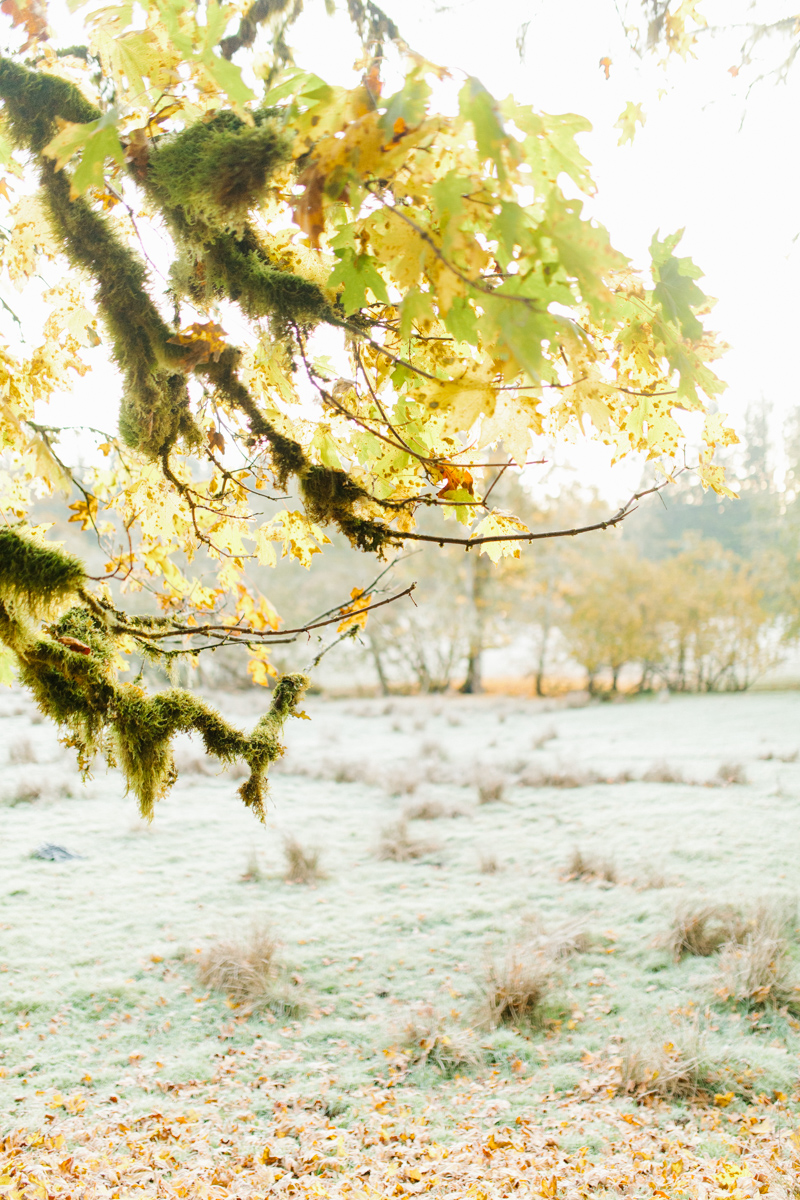 Sunrise Engagement Session on Cattle Ranch | Emma Rose Brides | Emma Rose Company Photography | Beautiful Sunrise Photo Session | VSCO | Winter Engagement Frosty Field Photo Session | Cute Engagement Inspiration-19.jpg