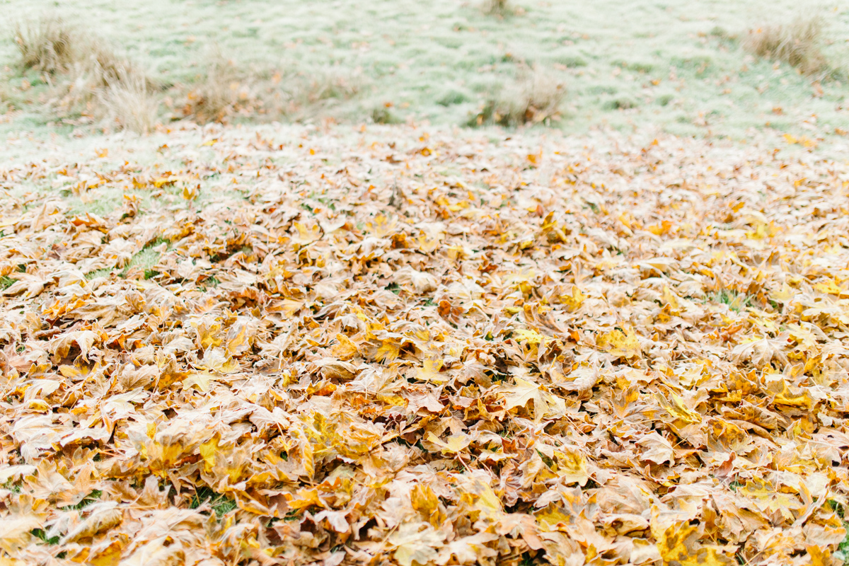 Sunrise Engagement Session on Cattle Ranch | Emma Rose Brides | Emma Rose Company Photography | Beautiful Sunrise Photo Session | VSCO | Winter Engagement Frosty Field Photo Session | Cute Engagement Inspiration-21.jpg