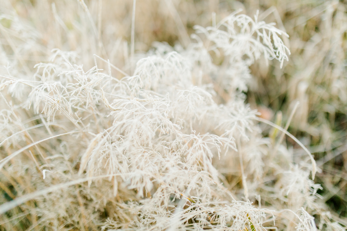 Sunrise Engagement Session on Cattle Ranch | Emma Rose Brides | Emma Rose Company Photography | Beautiful Sunrise Photo Session | VSCO | Winter Engagement Frosty Field Photo Session | Cute Engagement Inspiration-25.jpg