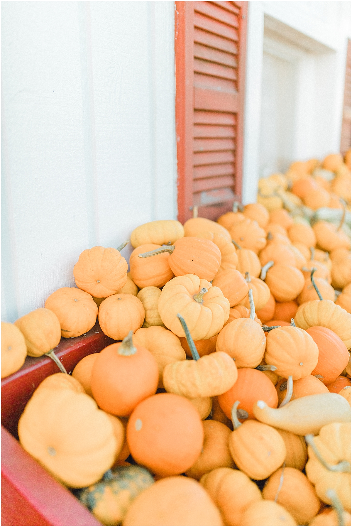 Pumpkin Patch Photo Shoot With Toddler and Mommy | Emma Rose Company Seattle Portland Light and Airy Wedding Photographer | Kindred Presets | Film_0020.jpg