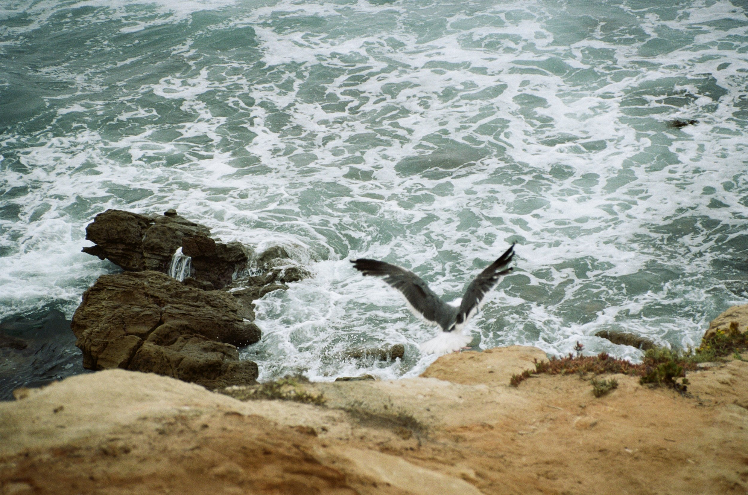 Flight, Laguna Beach, CA, USA