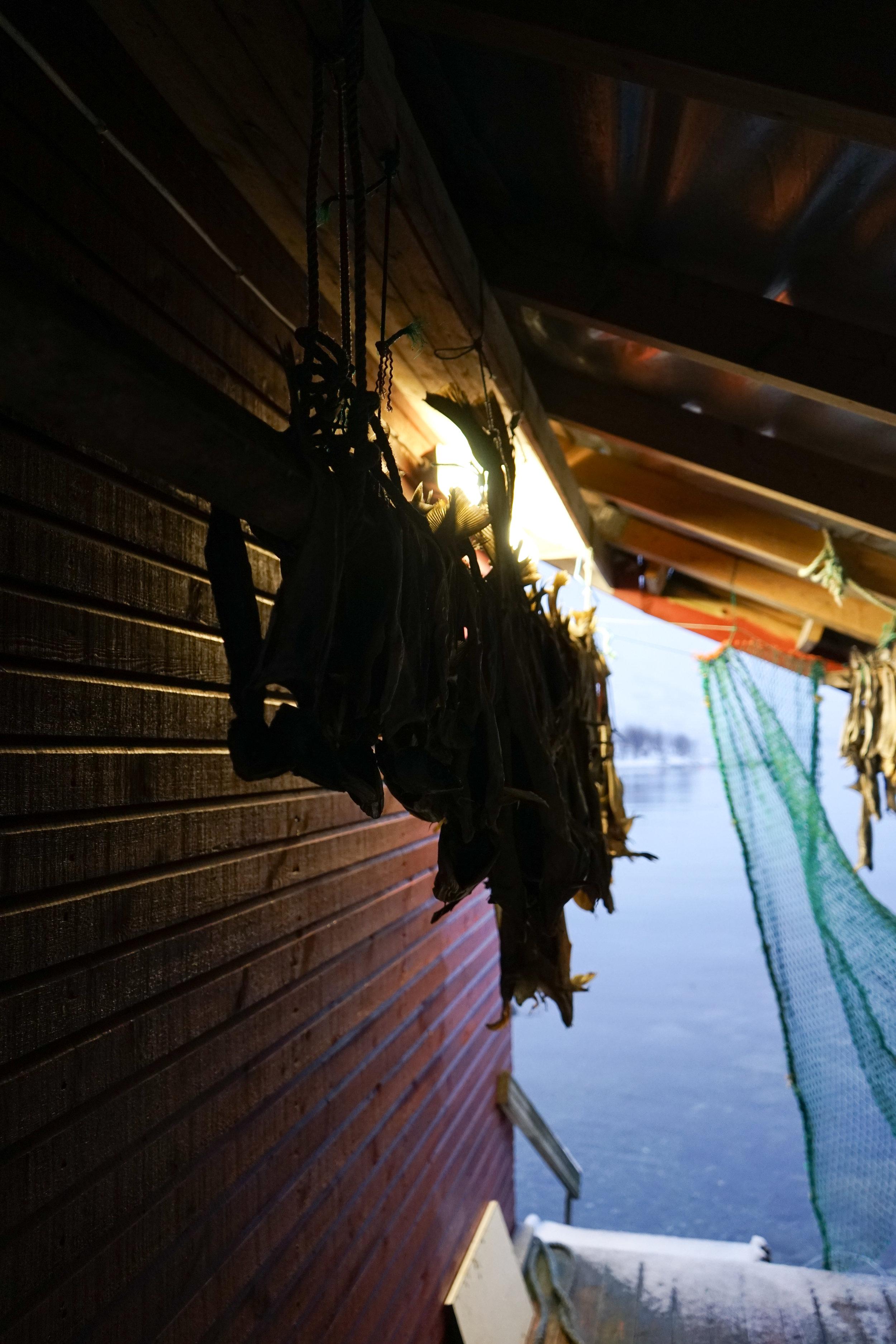 Tromso (16 of 1).jpg