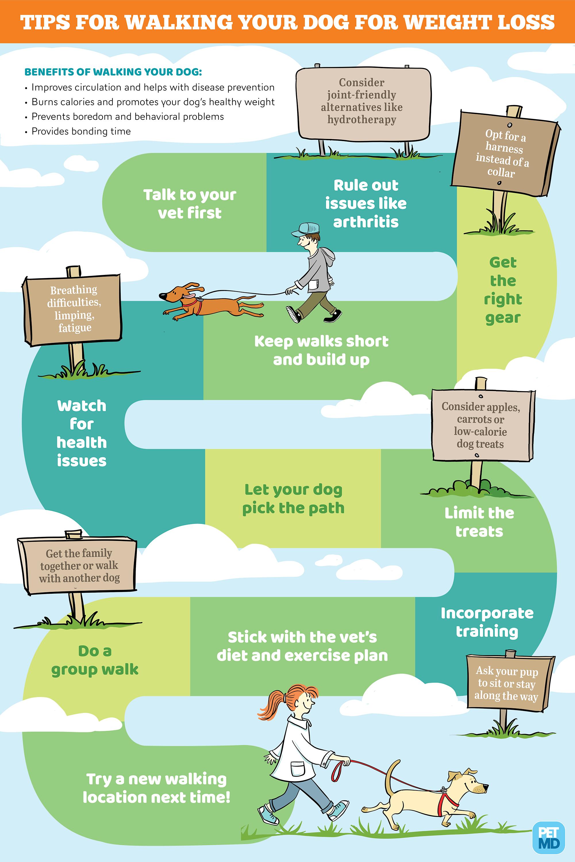 Infographic illustration & design for Pet MD.