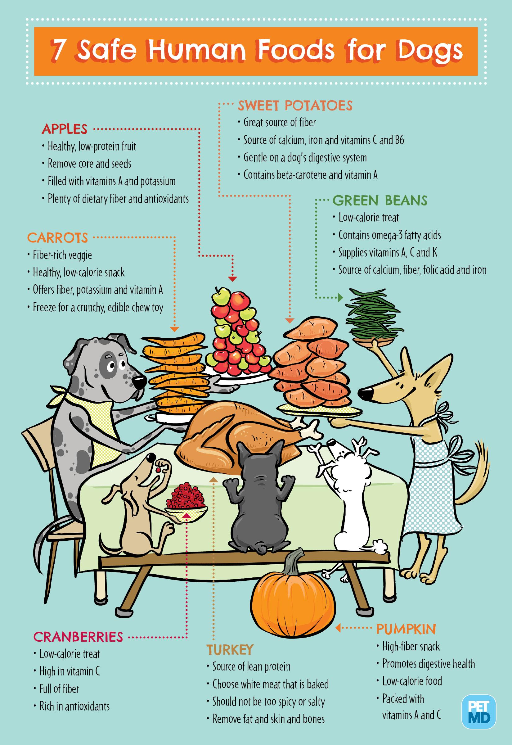 Infographic illustration & design for PetMD