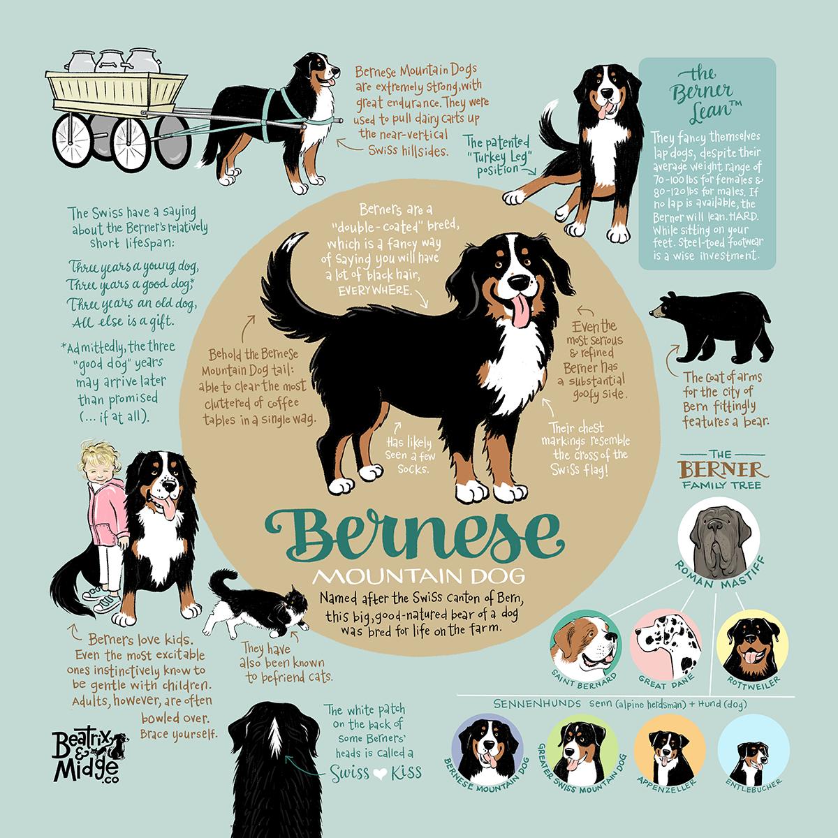 Infographic for my business  Beatrix & Midge Co .