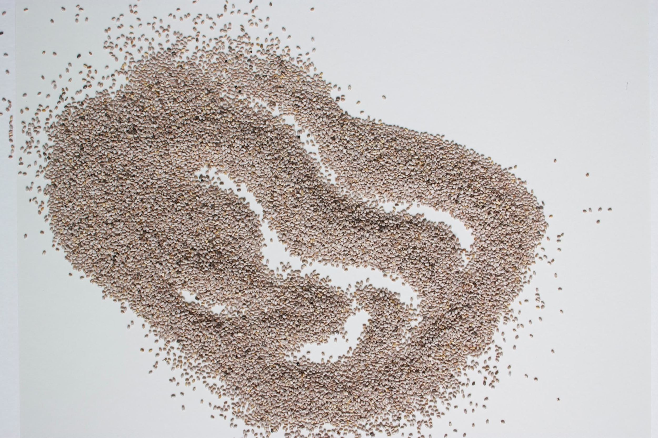 chia seeds for journal.jpg