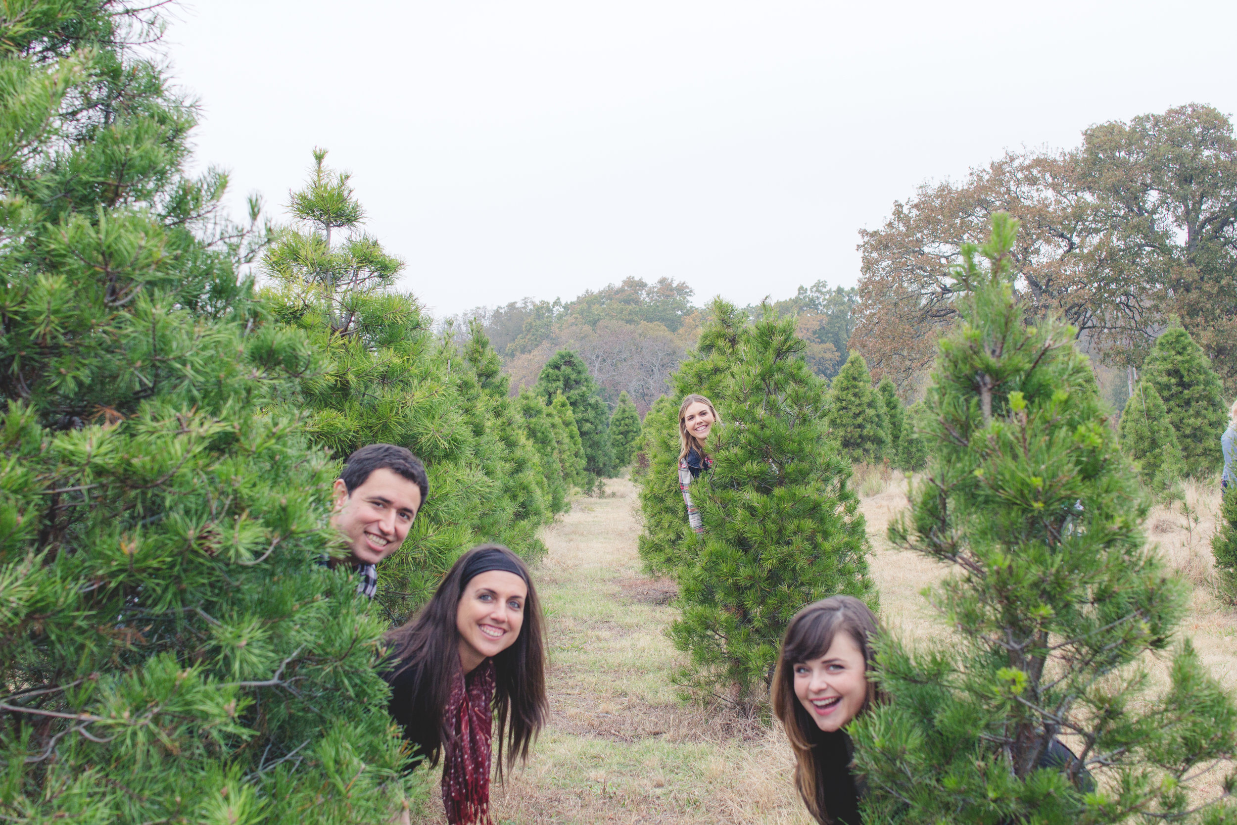 Christmas Tree Blog The Traveling