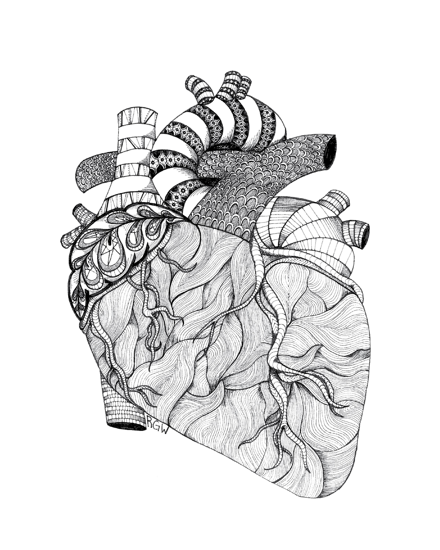 """anatomy: heart"""