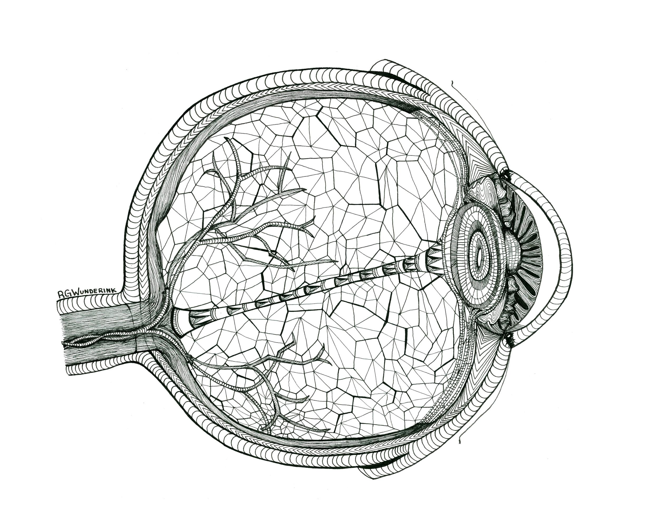 """""""anatomy: eye"""""""