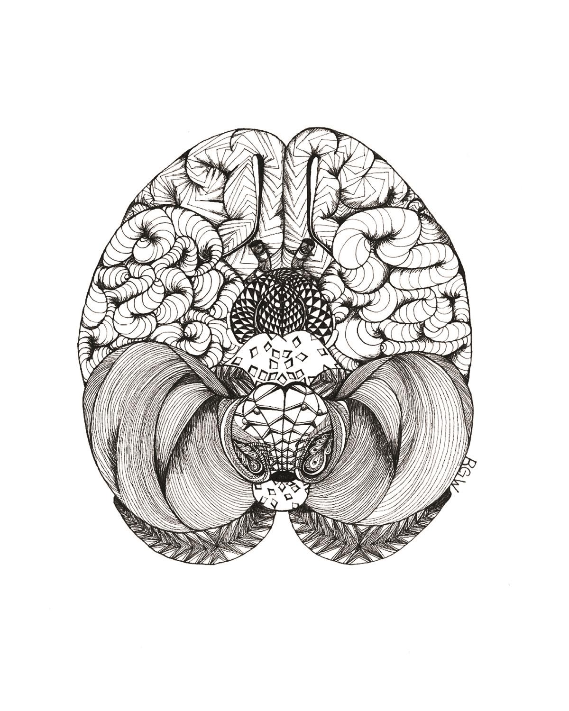 """""""anatomy: brain (bottom view)"""