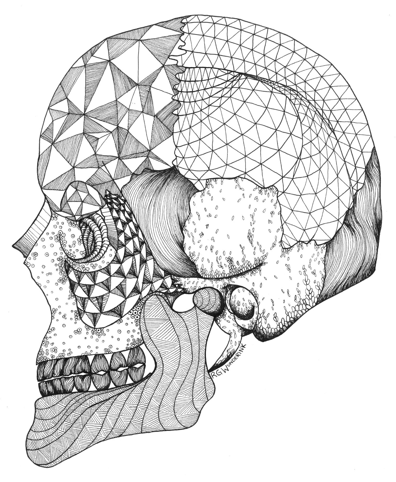 """""""anatomy: skull"""""""