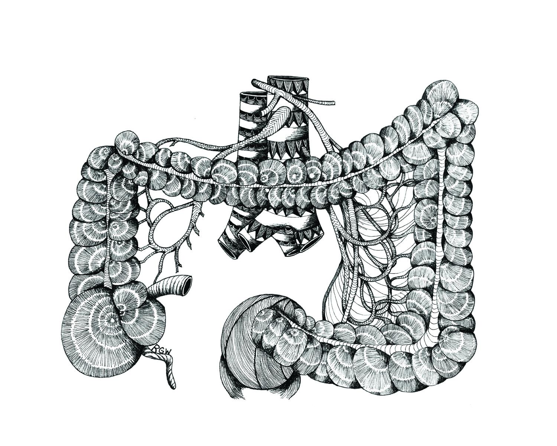 """anatomy: large intestines"""