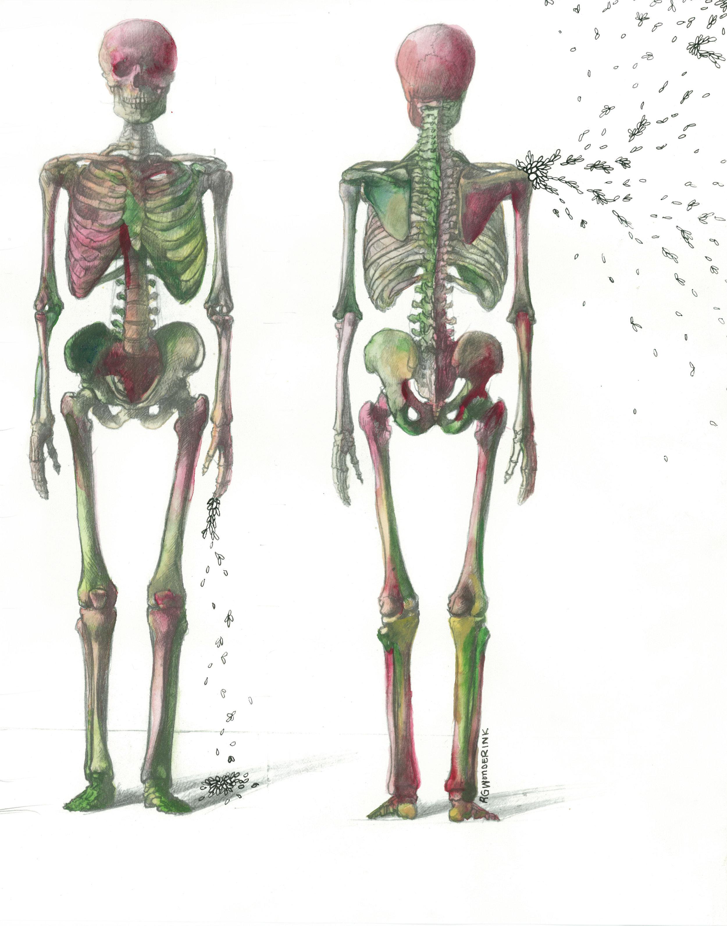 """anatomy appropriations no.14"""
