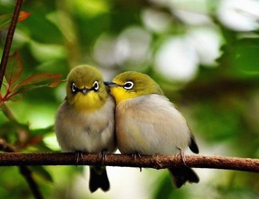 2cutebirds.jpg