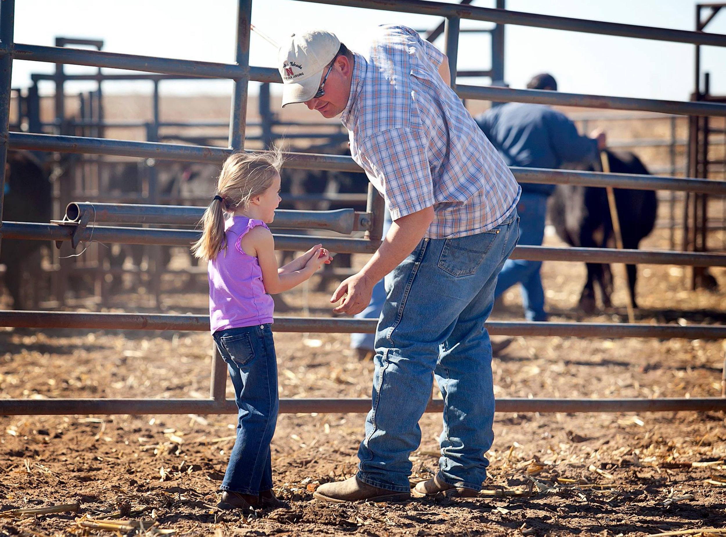 Working Cattle.jpg