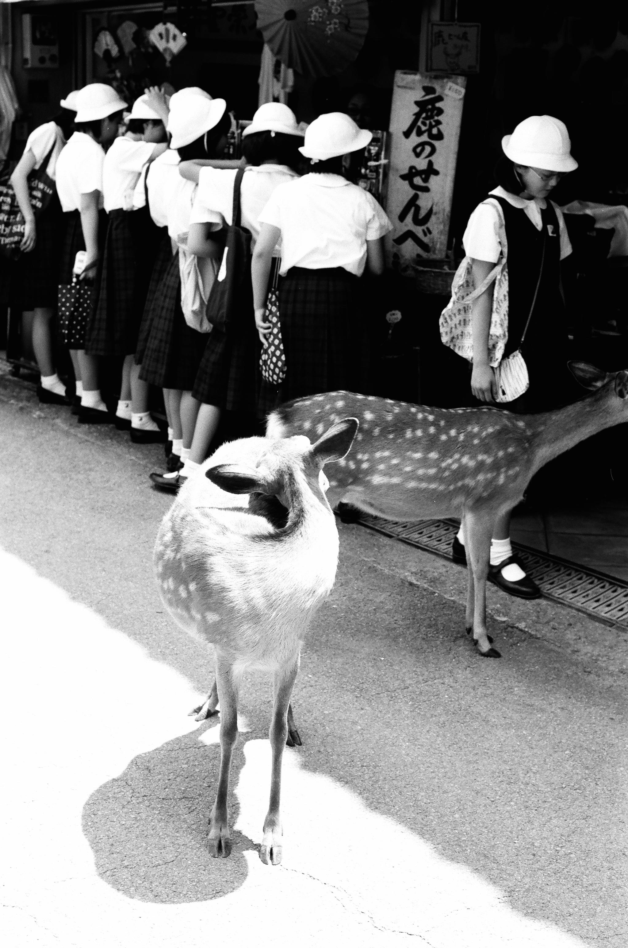 Nara, Japan. Girls and Deers.JPG