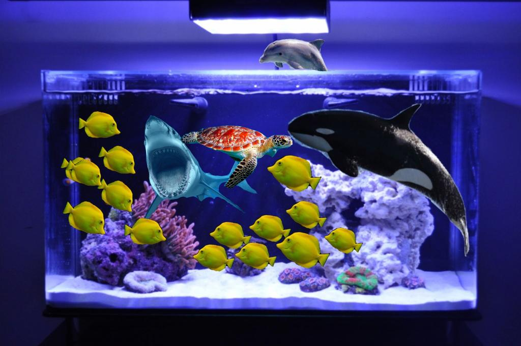 When some one asks to put one more fish in their tank---this is what we think of!