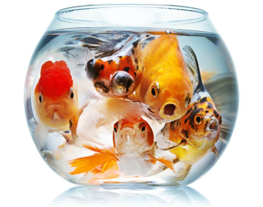 crowded-fish-bowl-e1432084171494.jpg