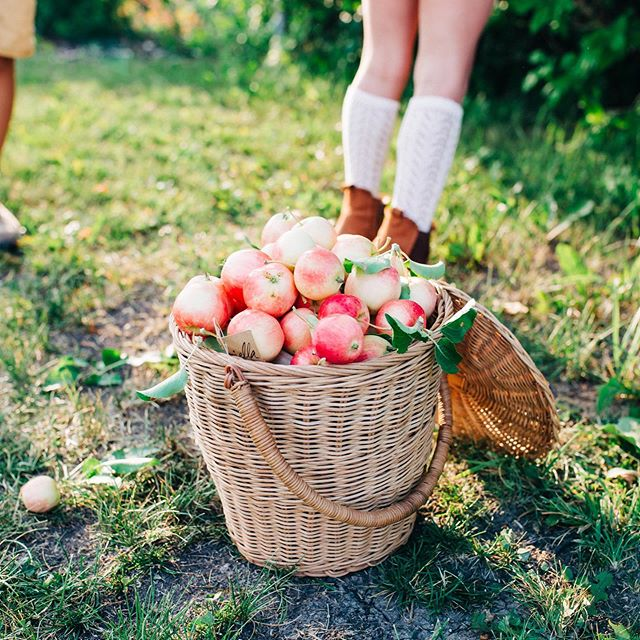 🍂🍎 We are ready for Fall after this shoot by @lynseycorbettphotography featuring the one and only @olliella apple basket! ⠀ .⠀ The Apple Basket is the sweetest tote for taking to the market, the beach or seasonally for fruit picking and Easter egg hunts! Handwoven from rattan, this basket features a little lid that hangs to the side when not in use.🍎🍂⠀ .⠀ Open T-S | 11-5⠀ .⠀ 🏷️ September Sale: Find 35% - 50% off selected items!⠀ . ⠀ 📷: @lynseycorbettphotography⠀