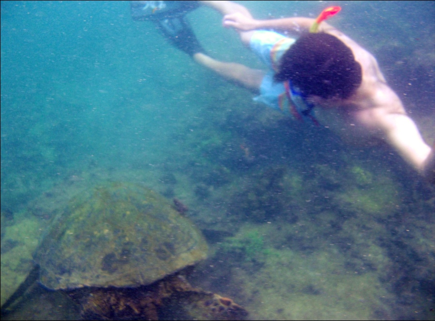 "Swimming with a sea turtle through ""Los Tuneles,"" Ecuador"