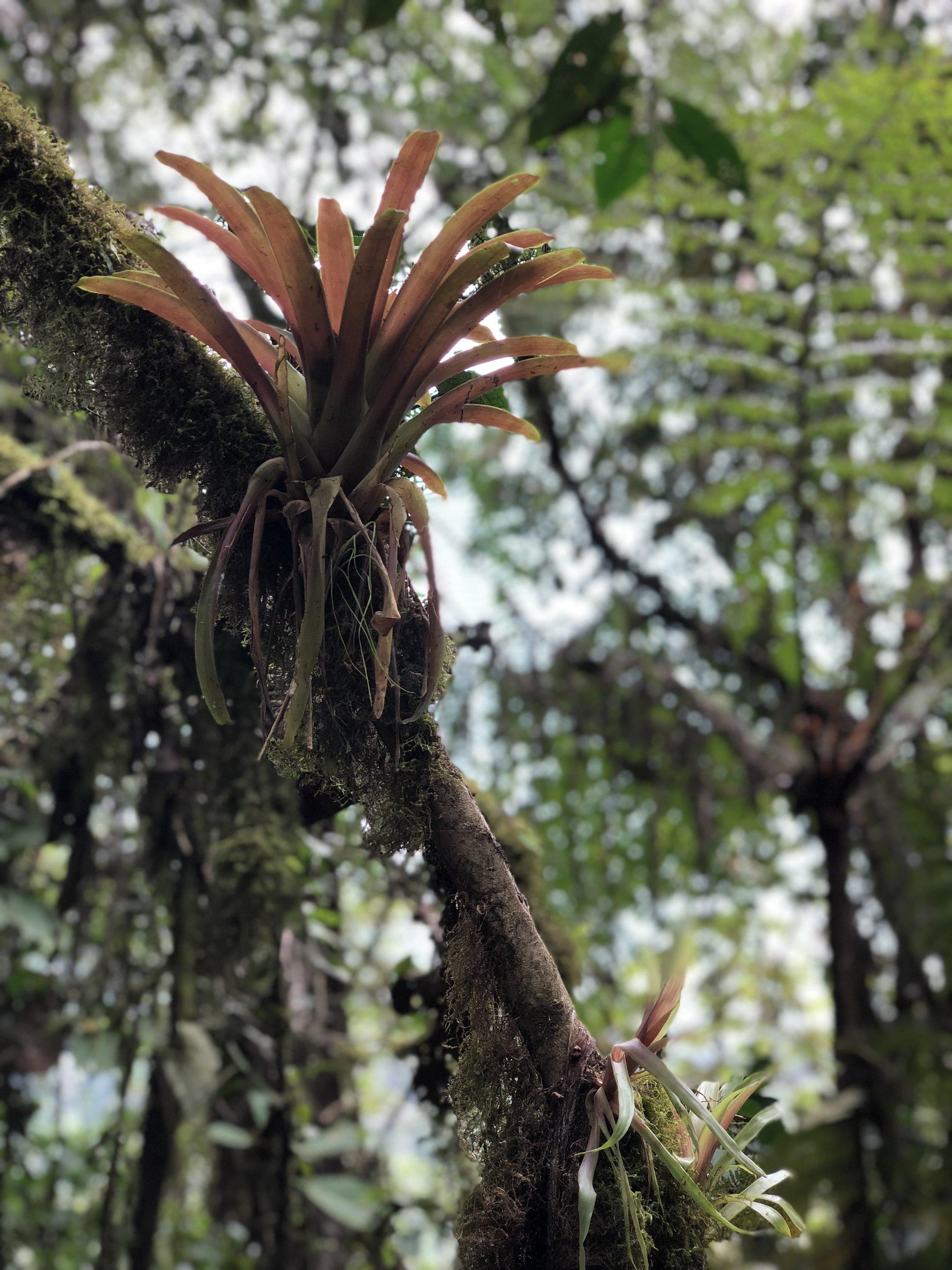 Mindo Plants