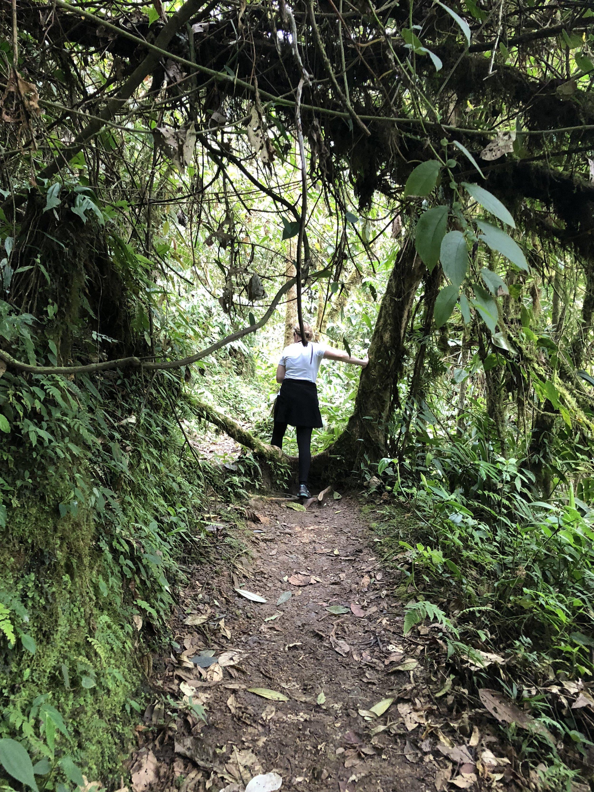 Hike to Mindo Waterfalls
