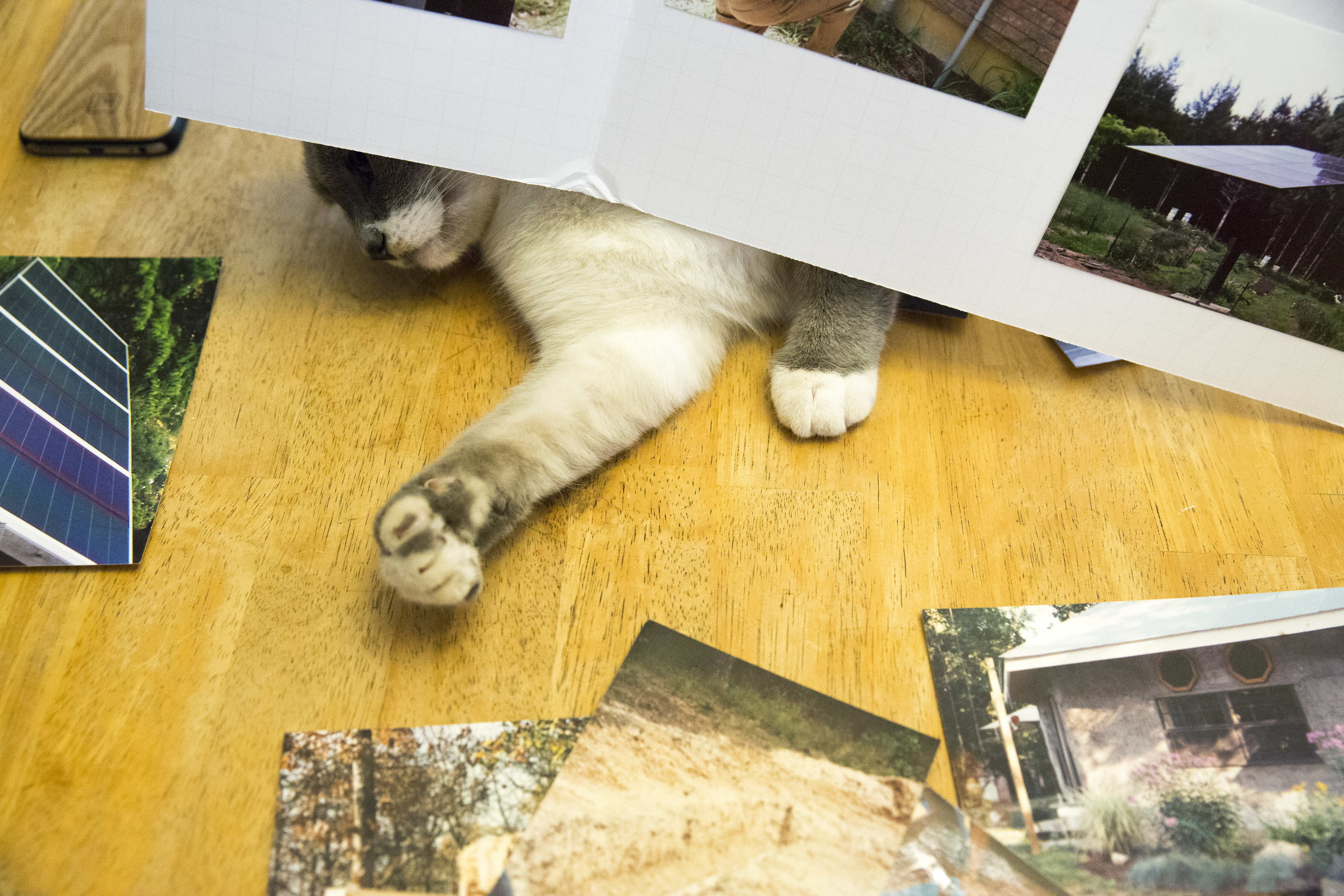 Nessie, one of the family pets, plays with photographs taken of the construction of Lorian Moore and Rex Rohrer's straw-bale house built during 1994-1997. The family has a total of six cats and four dogs.