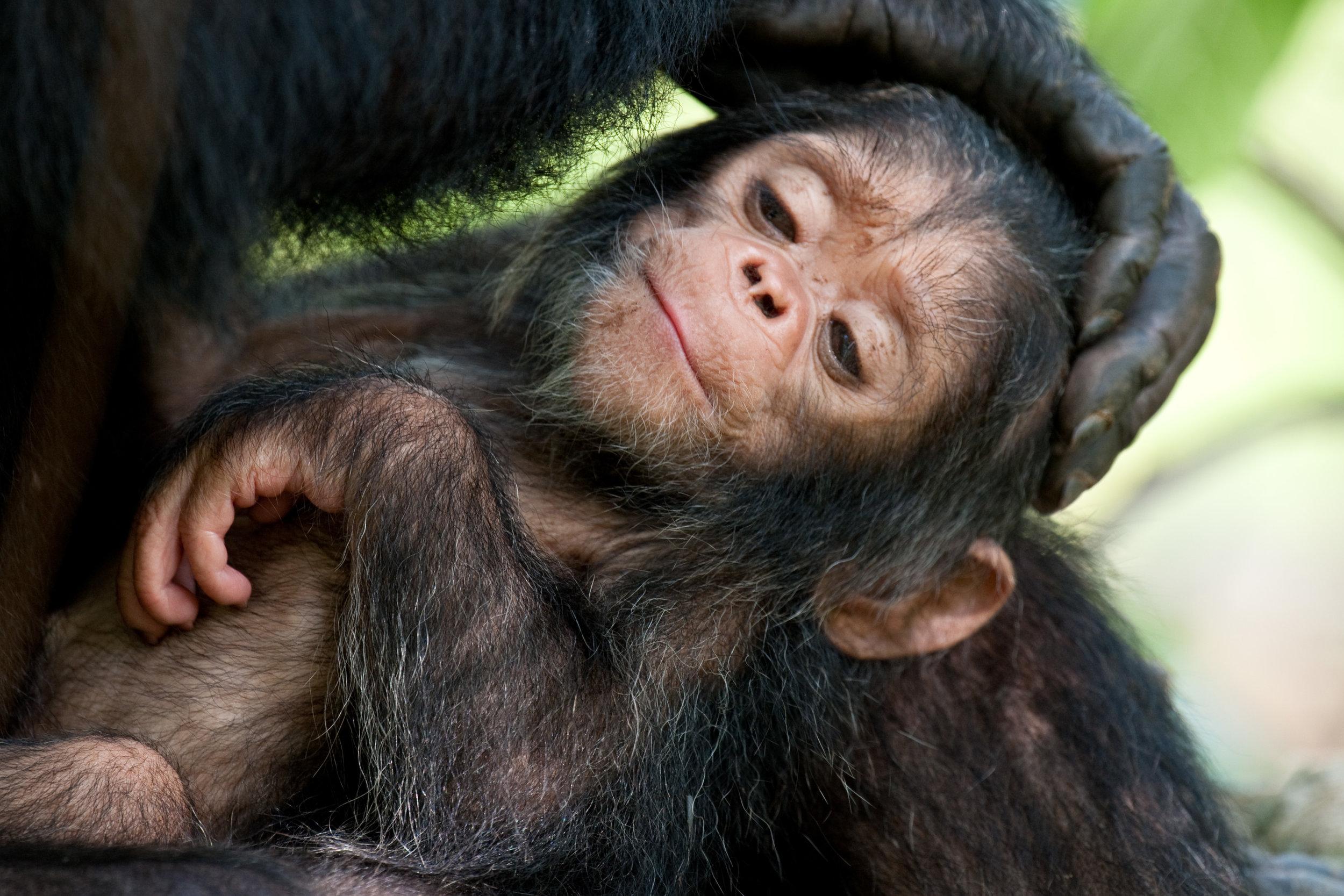 Newborns-4.jpg