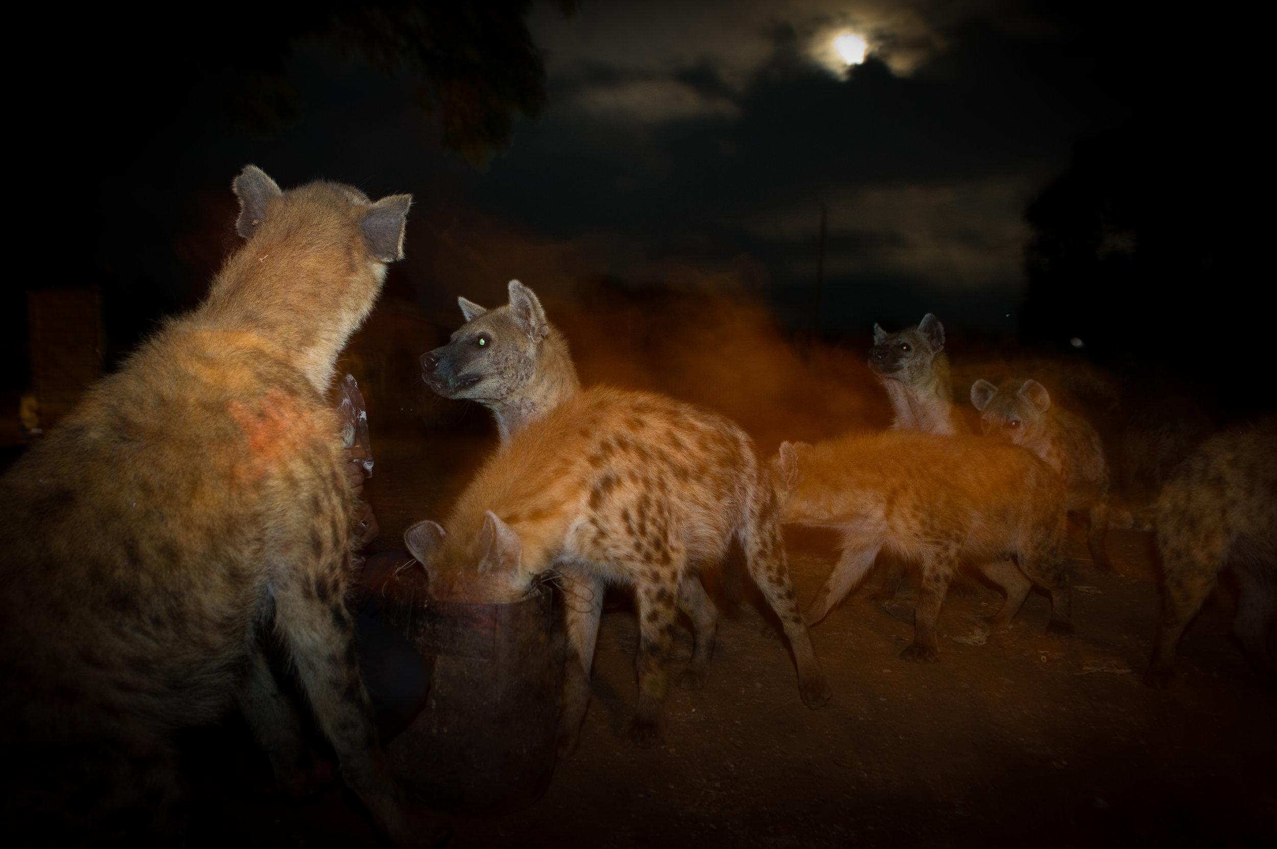 Hyena Man-2.jpg
