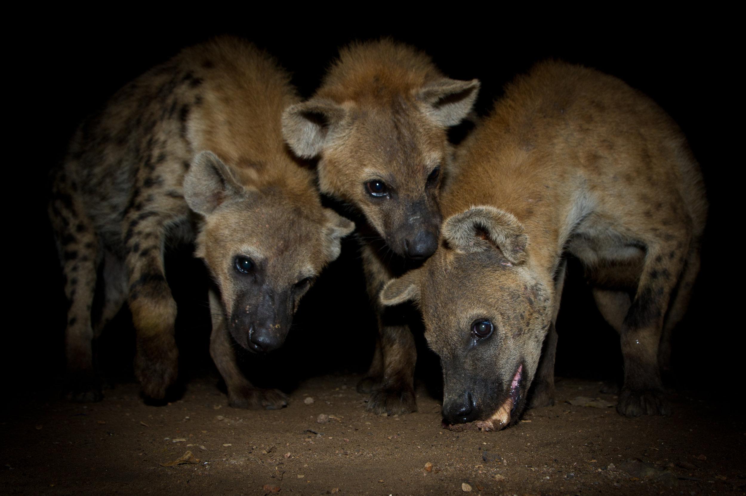 Hyena Man-14.jpg