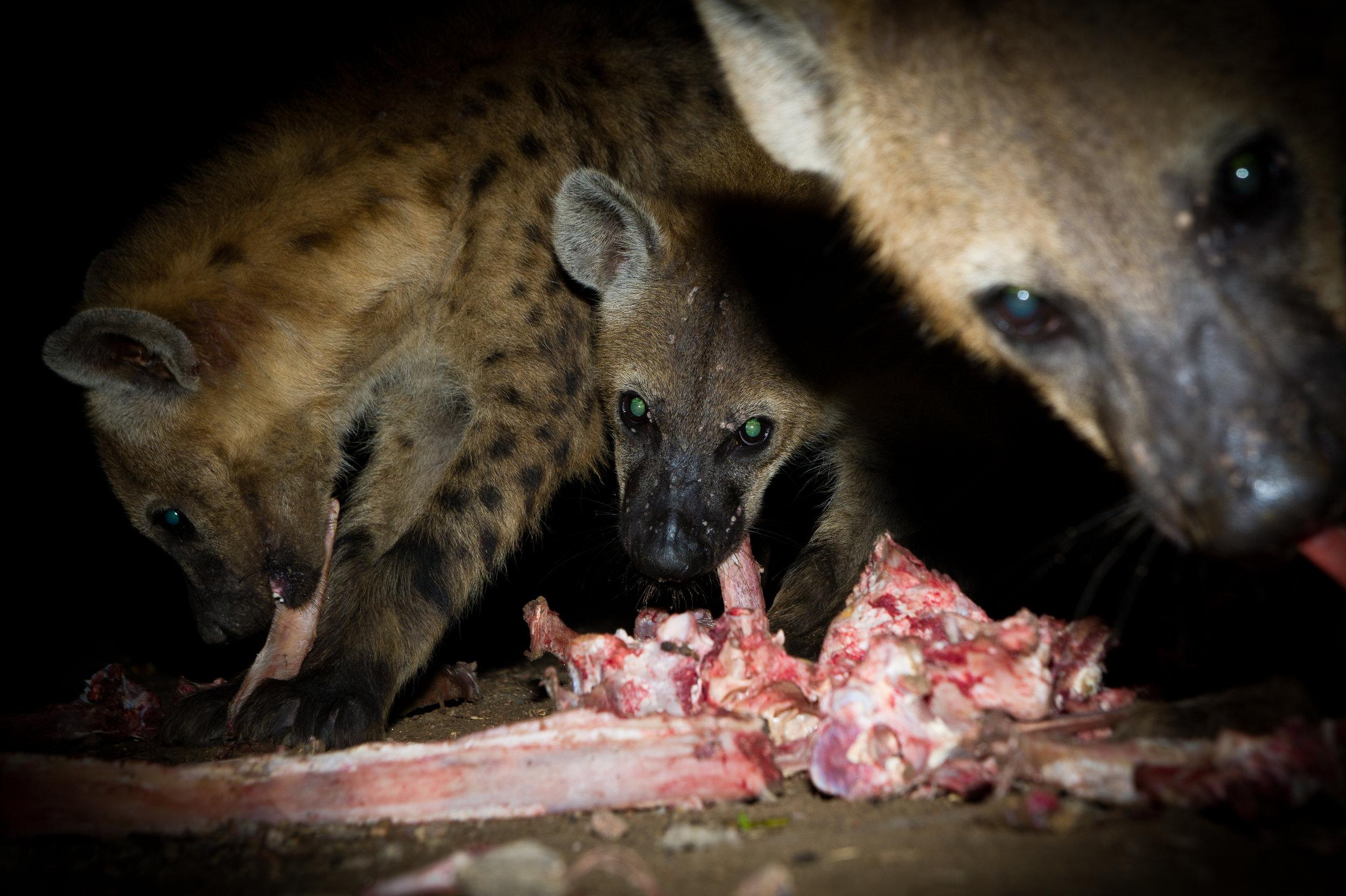 Hyena Man-37.jpg