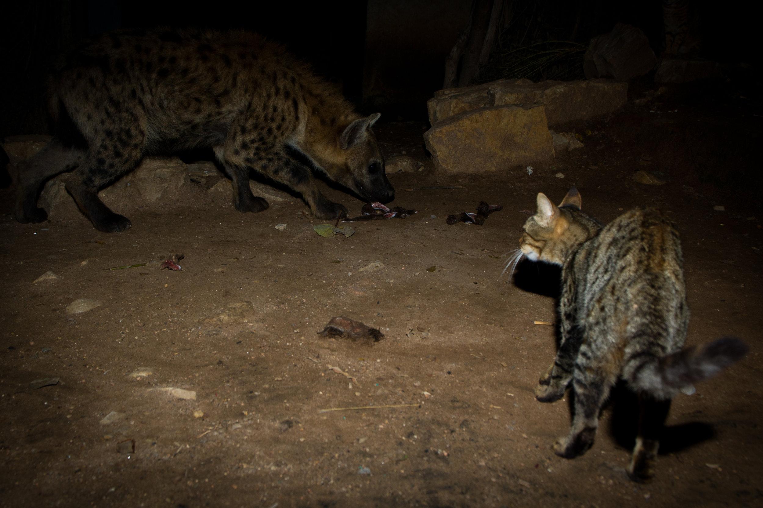 Hyena Man-41.jpg