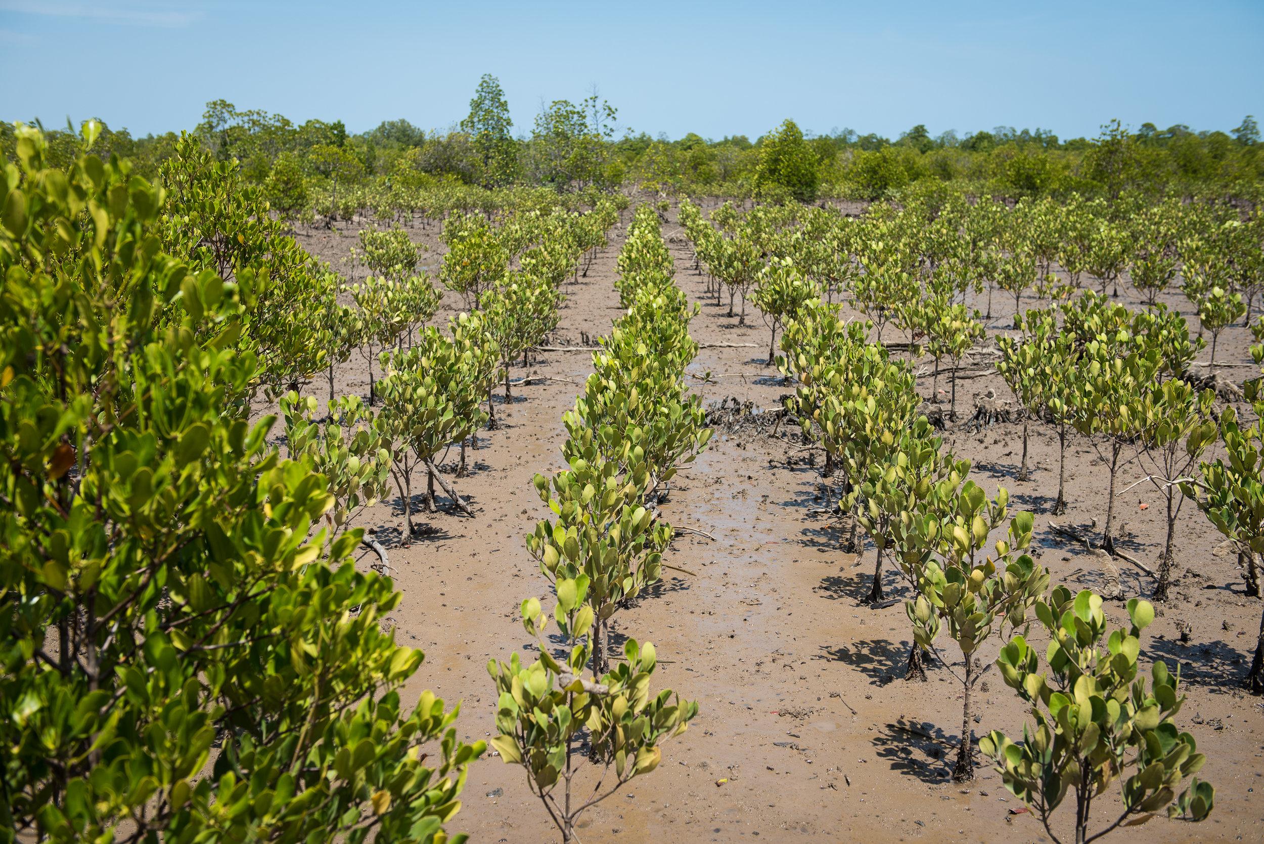 Madagascar Mangrove-1-7.jpg