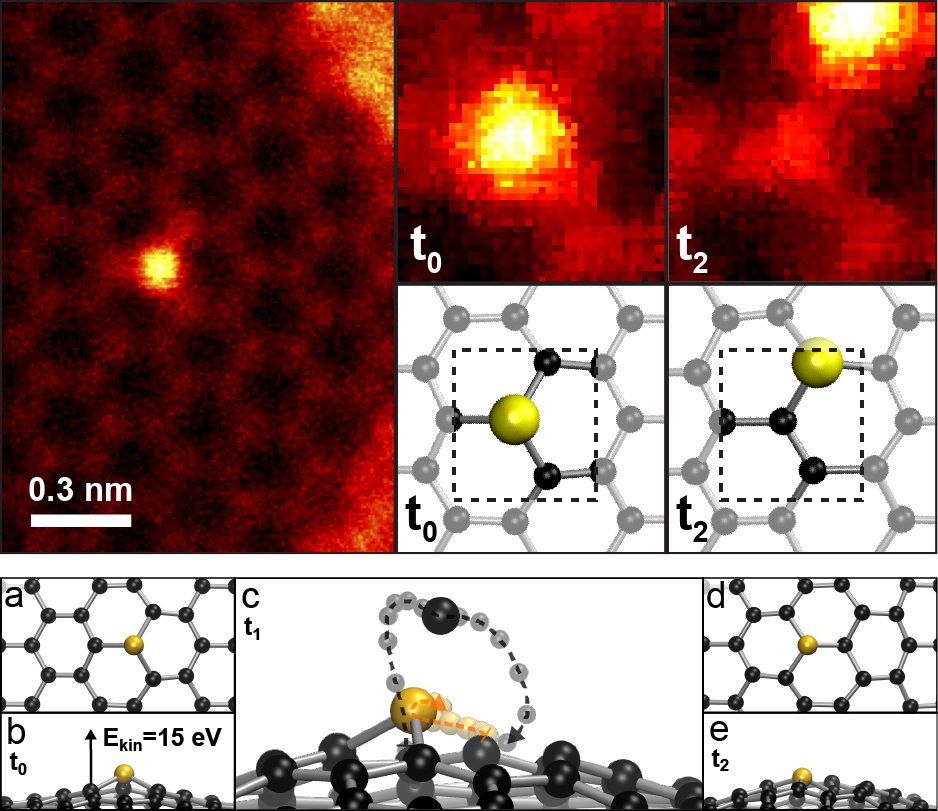 """A silicon atom embedded in the graphene lattice shows bright in the STEM MAADF scattering contrast. While imaging the area, the silicon atom """"jumps"""" to the next lattice site, with no atoms lost from the structure. The mechanism is explained by atomistic simulations which reveal the complex out-of-plane dynamics responsible for the Si-C bond inversion."""
