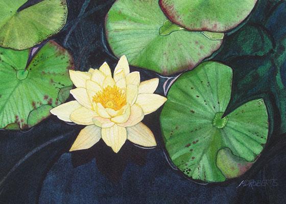 goldenwaterlily