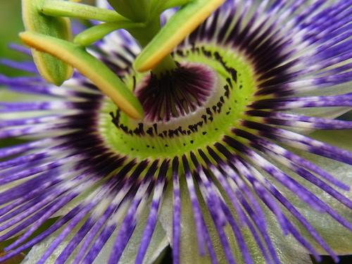 shine shame free flower luminous self-love pippa-la doube pippa creativity empowerment copy.JPG