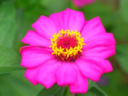 shine shame free flower luminous self-love pippa-la doube pippa creativity hell yeah copy.JPG