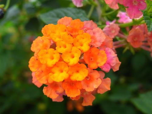 shine shame free flower luminous self-love pippa-la doube pippa creativity free copy.JPG
