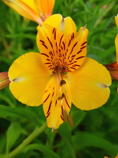 shine shame free flower luminous self-love pippa-la doube pippa creativity yes copy.JPG
