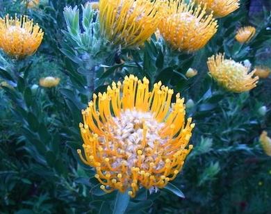 shine shame free flower luminous self-love pippa-la doube pippa creativity joy copy.JPG